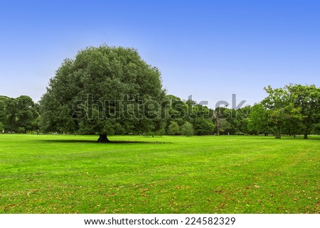 Meadow and big green tree #224582329