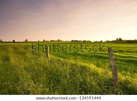 meadow and fence at sunset