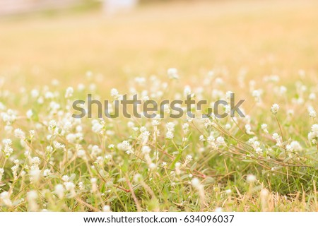 Meadow and golden glitter lights, wild meadow flowers on morning sunlight background. Autumn field background, vintage photo of white flower in sunny autumn field. Fresh natural morning photo #634096037