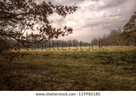 meadow and trees