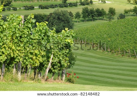 Meadow and vineyards in summer. Škalce, Slovenia