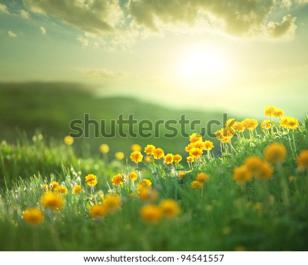 meadow at morning