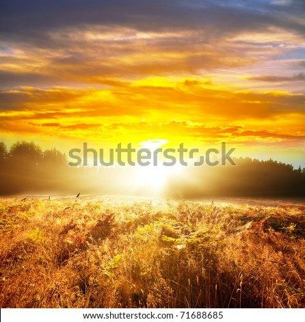 meadow at sunrise #71688685