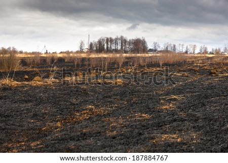 Meadow black charred after the fire