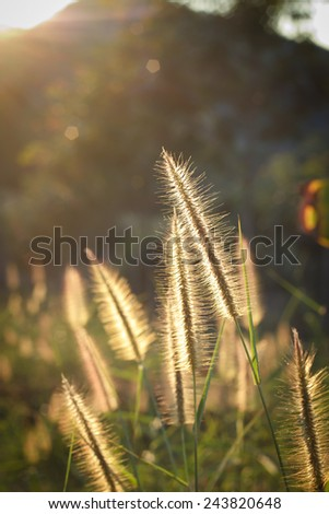 meadow close up in morning sun light.Back light of meadow.