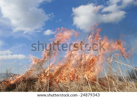 meadow fire and burning a grass wastelands, natural disaster