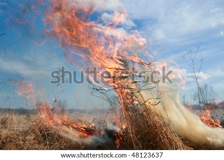 meadow fire and burning a grass wastelands, natural disaster and tongues of fire
