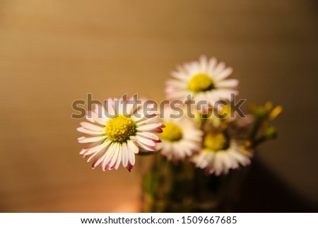 Meadow flower closeups - nicest flowers don't have to be from a store