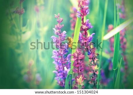 Meadow flower - Purple flower