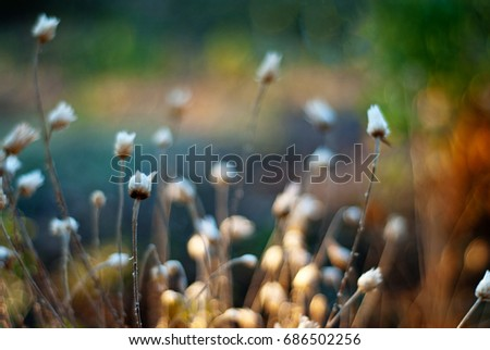 meadow flowers background. defocused nature pattern #686502256