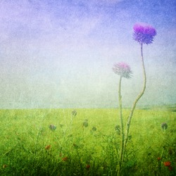 Meadow flowers / Grunge spring background. Copy space.