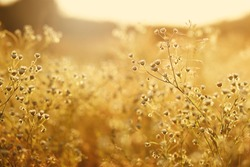 meadow flowers in early sunny fresh morning. Vintage autumn landscape