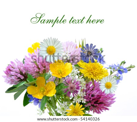 meadow flowers isolated on white background