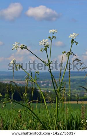 Meadow flowers on meadow in summer #1422736817