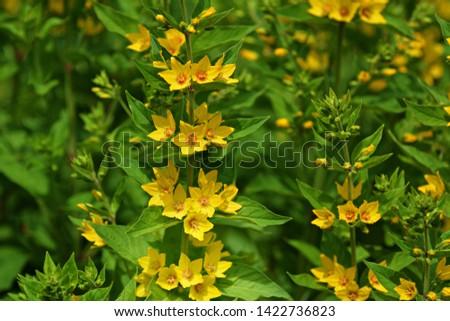 Meadow flowers on meadow in summer #1422736823