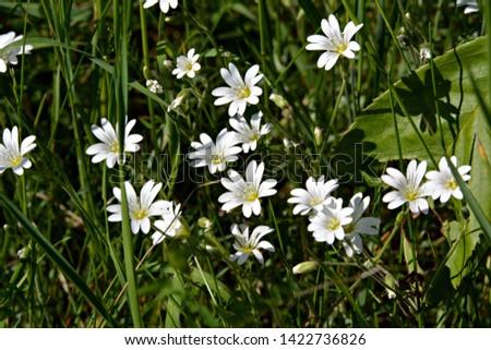Meadow flowers on meadow in summer #1422736826
