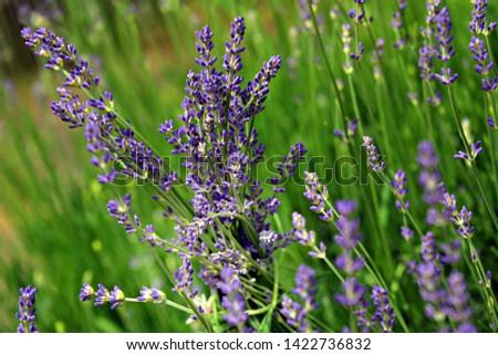 Meadow flowers on meadow in summer #1422736832