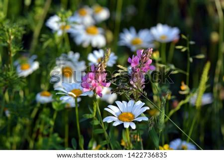 Meadow flowers on meadow in summer #1422736835