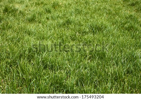 Meadow grass in the springtime in worm sunny weather