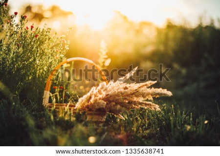 Meadow grass sunlight #1335638741