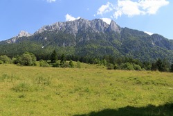 Meadow in front of the Zahmer Kaiser