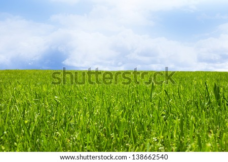 Meadow in spring #138662540