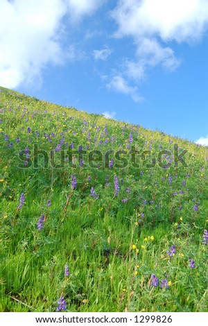 meadow in springtime with flowers