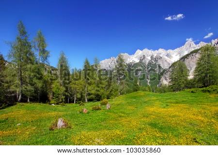 Meadow in the Alps