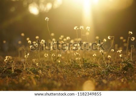 meadow in the sunrise #1182349855
