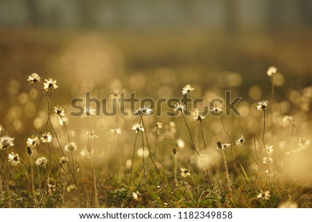 meadow in the sunset #1182349858