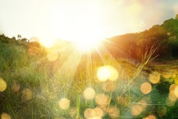 Meadow landscape refreshment with sunray and golden bokeh.