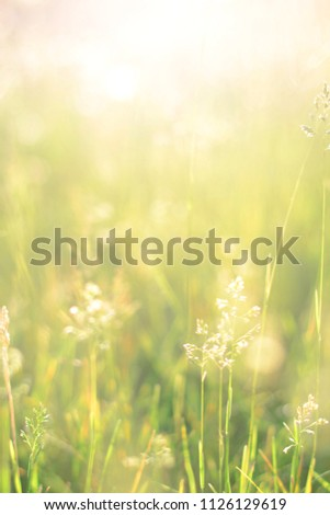 Stock Photo Meadow morning. Nature background with grass and wildflowers field. Lawn in the sunlight. Soft focus. Sunrise or sunset