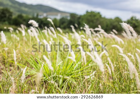 meadow Nature spring outdoor background. soft focus.