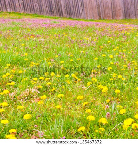 Meadow of spring wild flowers against wooden fence. selective focus