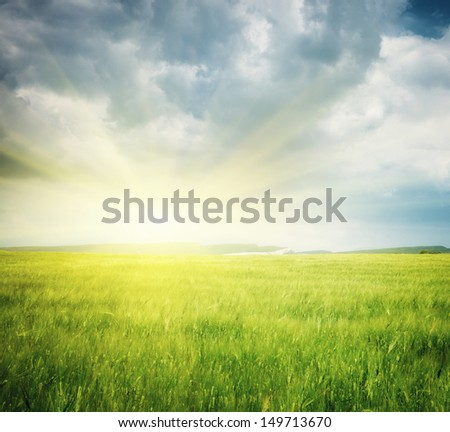 Meadow of wheat. Nature composition. #149713670