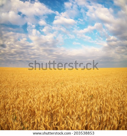 Meadow of wheat. Nature composition. #203538853