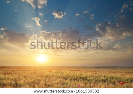 Meadow of wheat on sundown. Nature composition. #1061530382