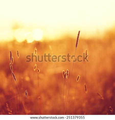 meadow plants on sunny field background