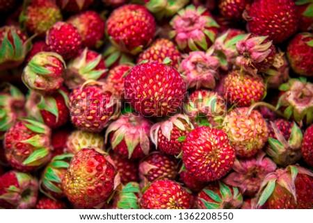 Meadow strawberries, wild berries, wild strawberries #1362208550