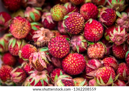 Meadow strawberries, wild berries, wild strawberries #1362208559