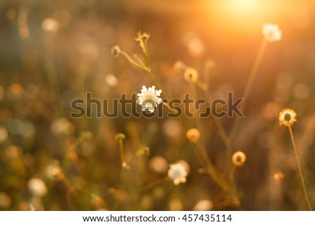 Meadow. Wild flowers and plants at sunset close #457435114