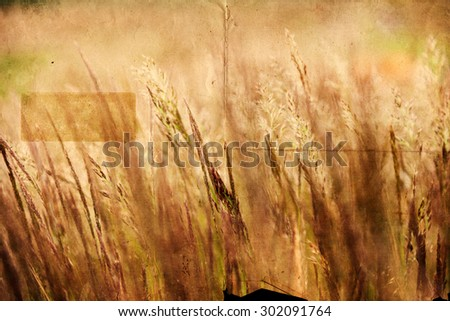 meadow with blowing grass ears textured with a texture of old paper