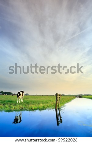 Meadow with canal and cow under cloudy sky, the Netherlands