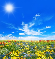 Meadow with colorful spring flowers. Tulips over sunny spring blue sky background. Spring time. Spring blossoming