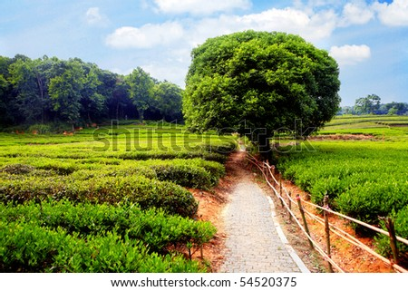 Meadow with dirt road and tree on horizon