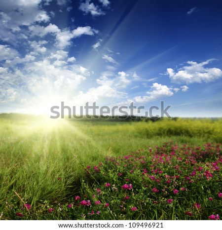 Meadow with flowers and sunshine