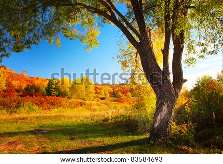 Meadow with grass and big autumn tree with blue sky