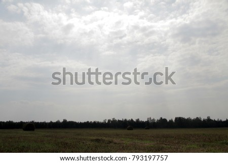 Meadow with green grass and blue sky with clouds. #793197757