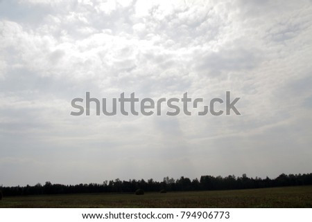 Meadow with green grass and blue sky with clouds. #794906773