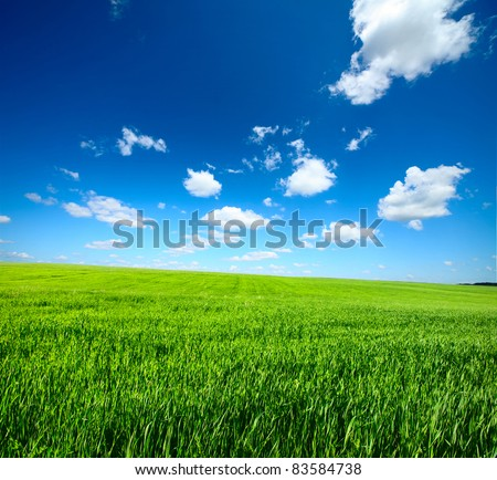 Meadow with green grass and blue sky with clouds #83584738